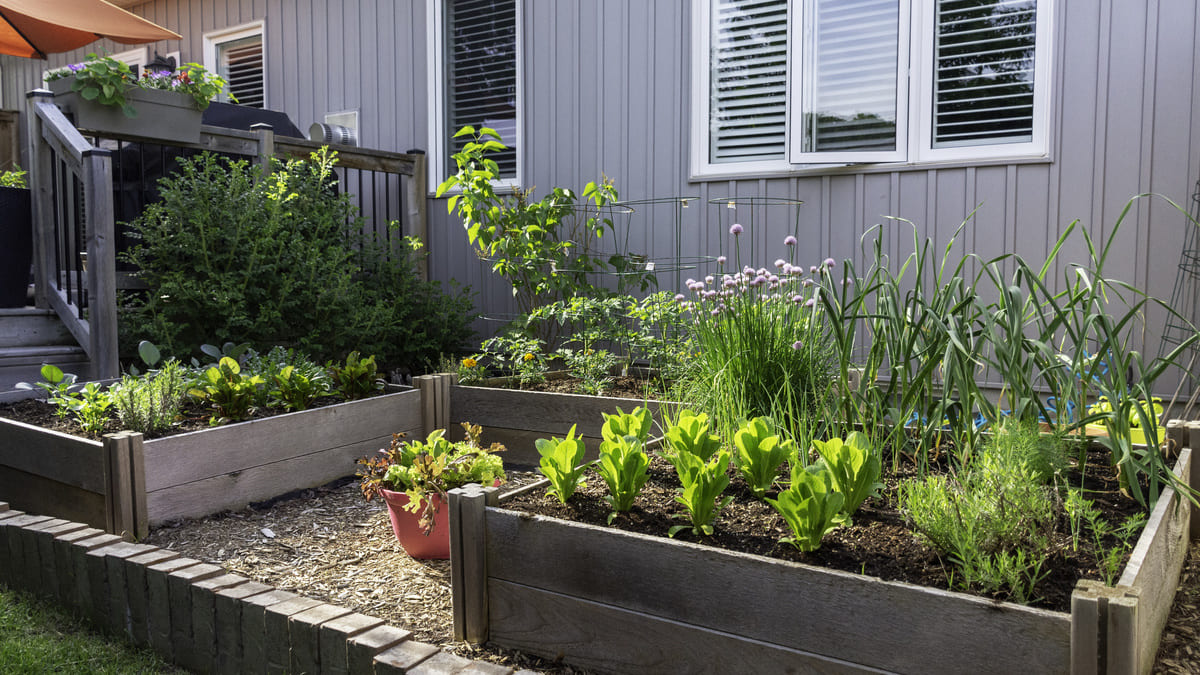 自家菜園 家庭菜園